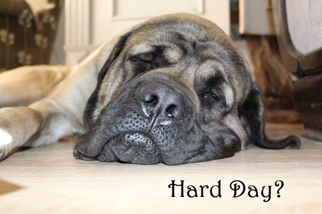 a hard day - a dog feeling worn out